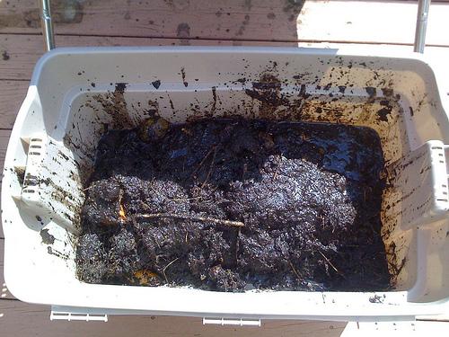 6 Weeks Of Compost